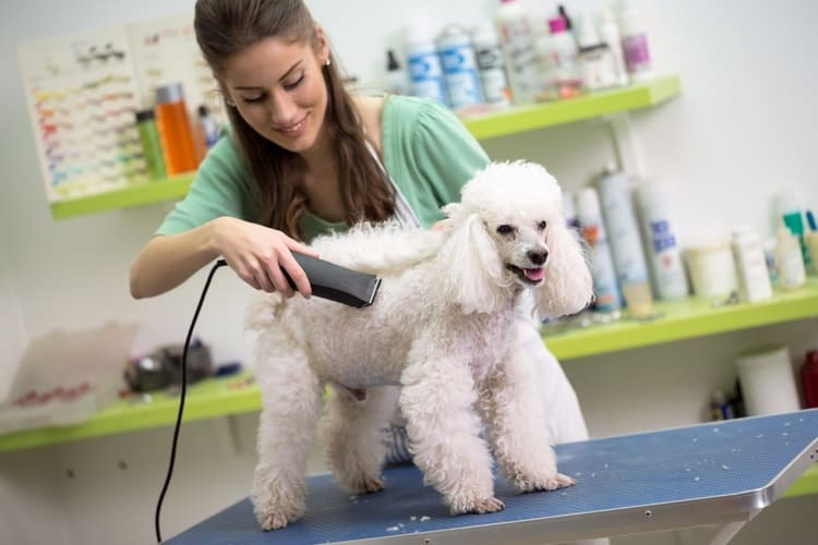 pet grooming service