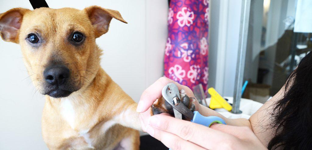 Pet Grooming Miami